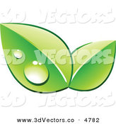 3d Vector Clipart of a Pre-Made Logo of Two Green Dew Covered Leaves on White by Beboy