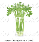 Vector Clipart of a 3d Bunch of Fresh Celery by AtStockIllustration