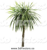 Vector Clipart of a 3d Palm Tree by Dero