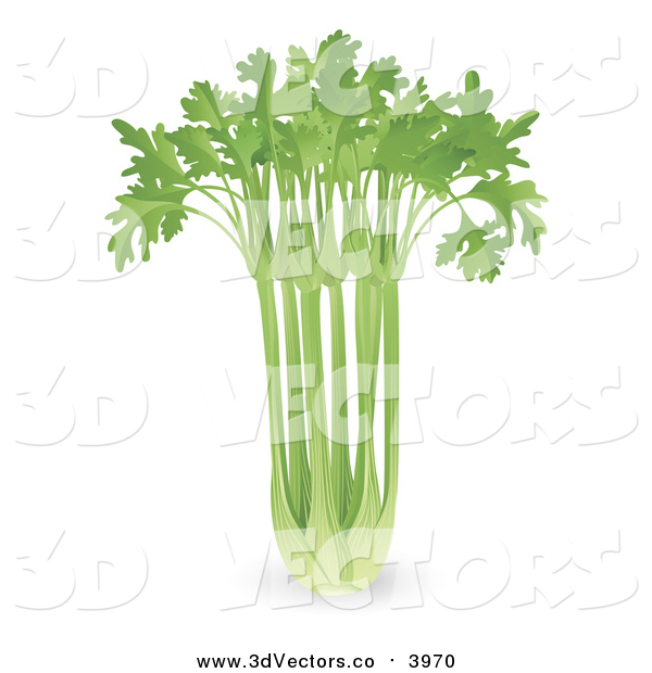 Vector Clipart of a 3d Bunch of Fresh Celery
