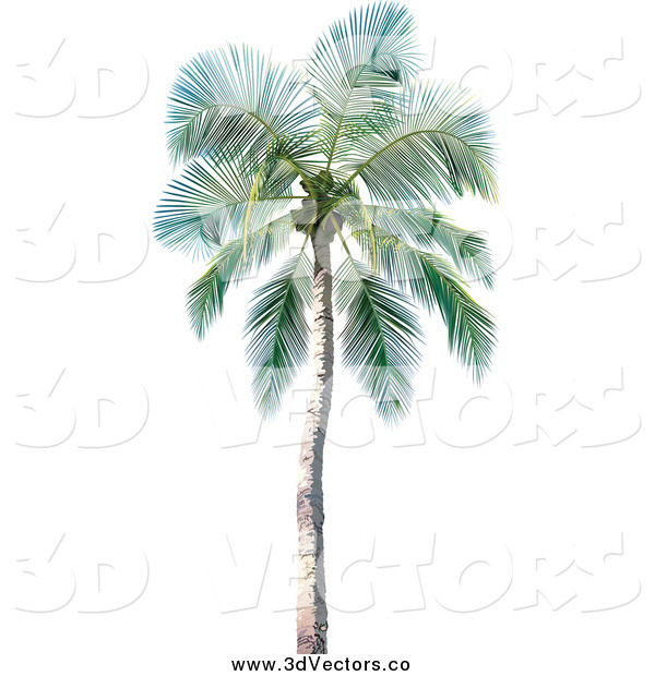 Vector Clipart of a 3d Palm Tree